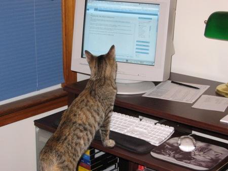 Meerkat typing her entry