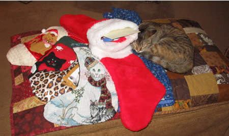Meerkat on Ottoman with Christmas Stockings