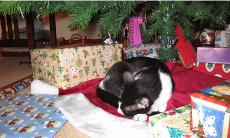 Panda sleeping in the presents
