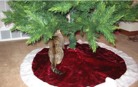 Meerkat chewing the tree