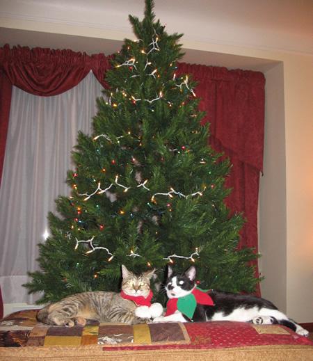 Kittens pose for Christmas