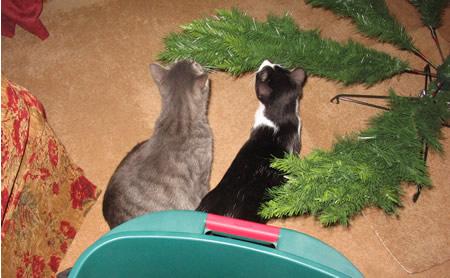 Padre and Panda chew the tree