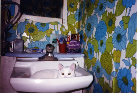 1991 Mohawk in the sink!