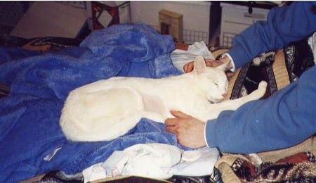 January 9th, 2002:  Keeping Mohawk comfortable