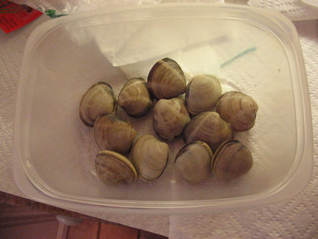 Clams for the Bambinos!
