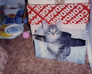1992 Clyde in Tissue Box