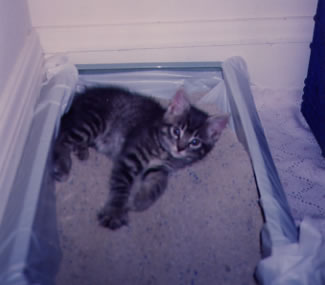 Clyde in Litter Box in his Closet