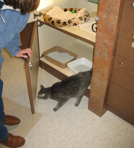 Exploring the floor at The Barkley Pet Hotel