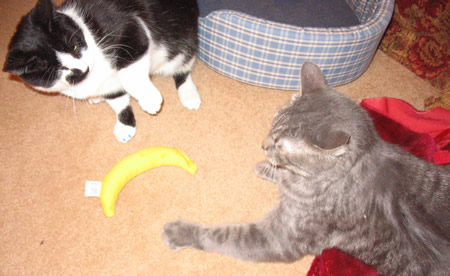 Go ahead … grab the banana … make my day