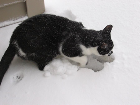 Digging in the Snow!