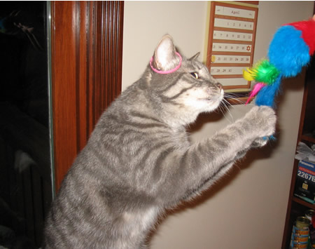 Grabbing for the feather tail mousie!