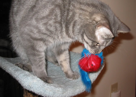 Chomping the feather tail mousie