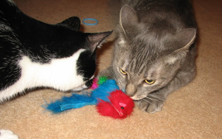 Panda trying to steal the feather tail mousie from me!