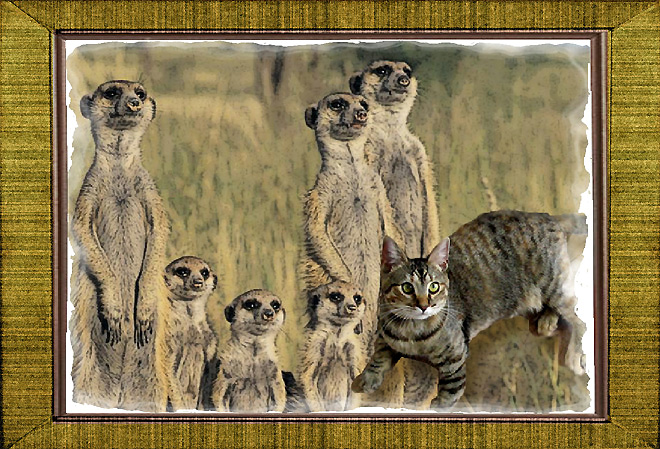 Meerkat Family Portrait from Zoolatry