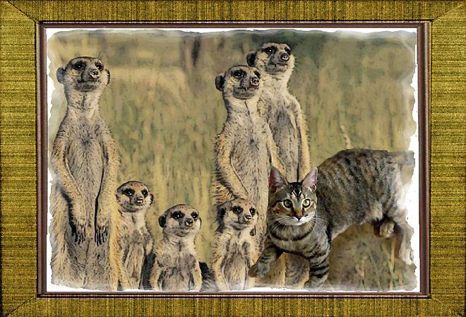 Meerkat Family Portrait from Zoolatry