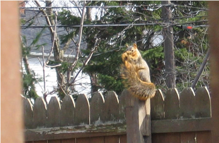 Squirrel has to bathe, too!