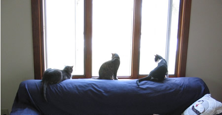 One window for each of us!