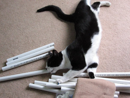 Panda helps arrange the materials