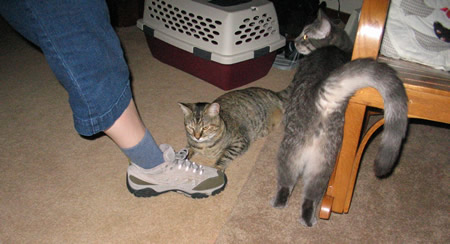 Meerkat Sniffs Mommys Shoe While Padre Shows Off His Spot 13