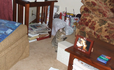 Meerkat Greets Aunt Deb in the Messy Living Room