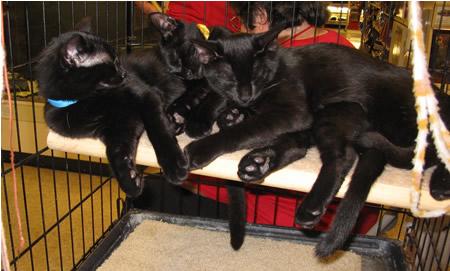 Pile O Kittens