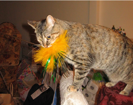 Meerkat Feather Toy