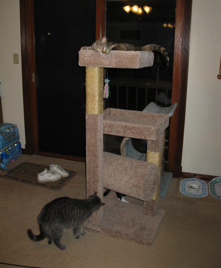 Meerkat is Queen of The Tower Padre Sniffs Tentatively
