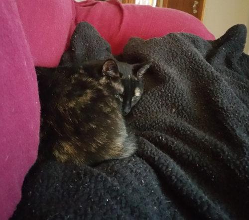 samoa-cuddling-on-sofa-2016-03-02